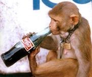 Jullunder_monkey_drinking_coca-cola